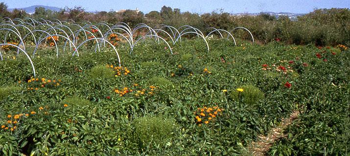 La superficie de cultivo ecológico ha crecido un 5% en Canarias desde 2013
